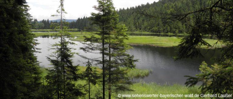 lohberg-kleiner-arbersee-rundwanderweg-see-ansicht-panorama