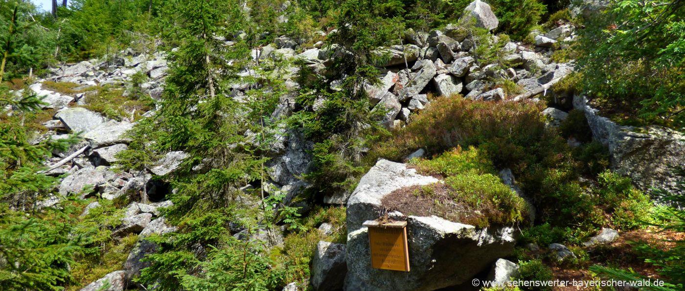 lusen-wandern-ausgangspunkt-ab-fredenbrücke-teufelsloch-felsen