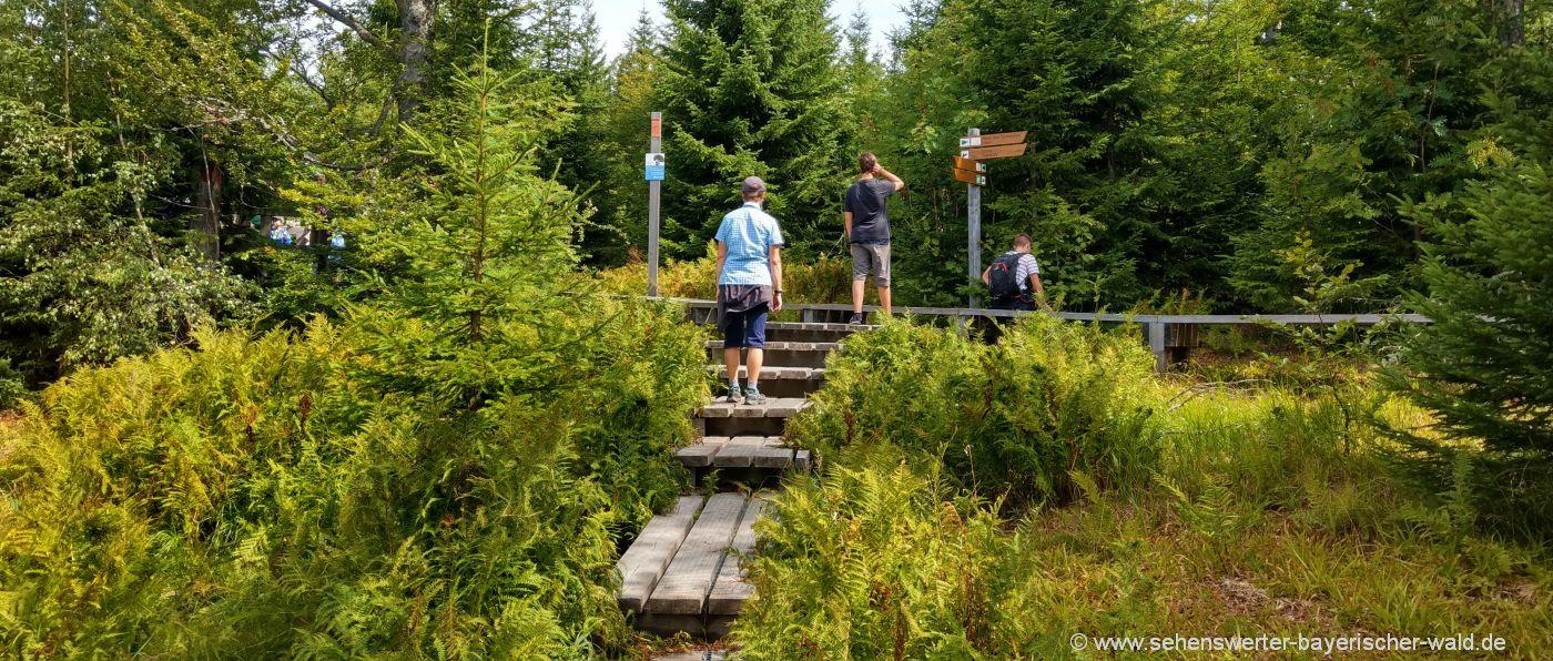 lusen-wanderwege-bayerischer-wald-bergwandern