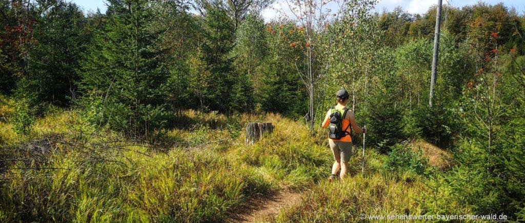Wanderung Nationalpark Bayerischer Wald Steinbachklause Wildschutzgebiet Riedlhäng