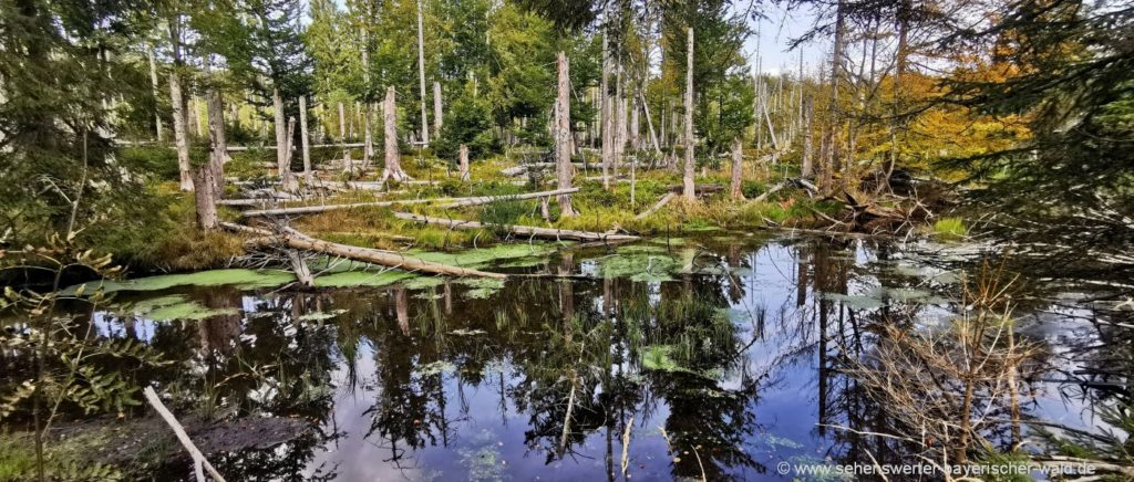Steinbachklause Wanderung Sagwassersäge Tummelplatz & große Kanzel