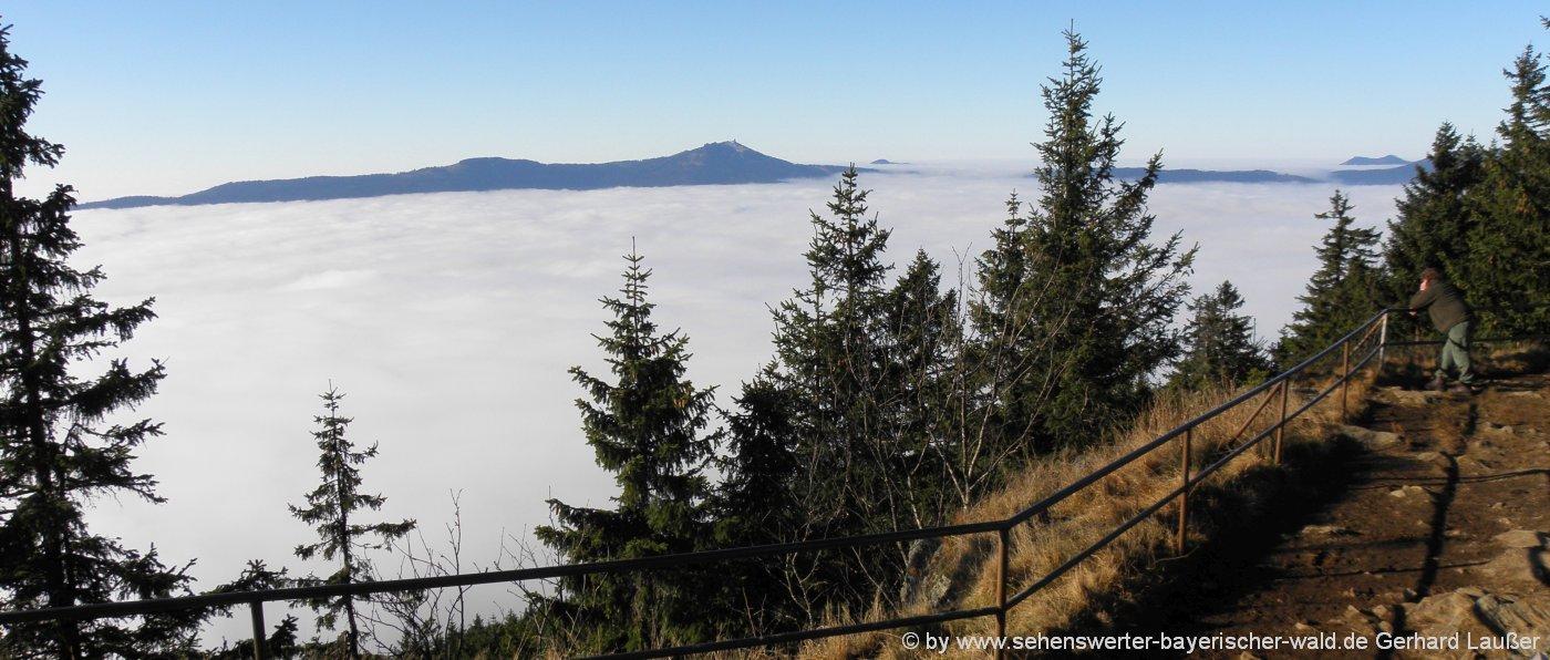 nationalpark-bayerischer-wald-hoehenwanderung-falkenstein-wolkenmeer