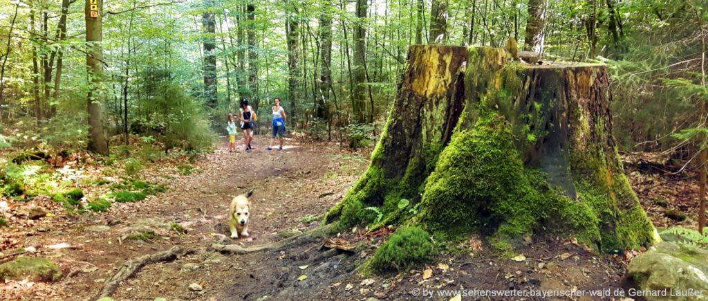 Wandern im Nationalpark Bayerischer wald Wanderungen