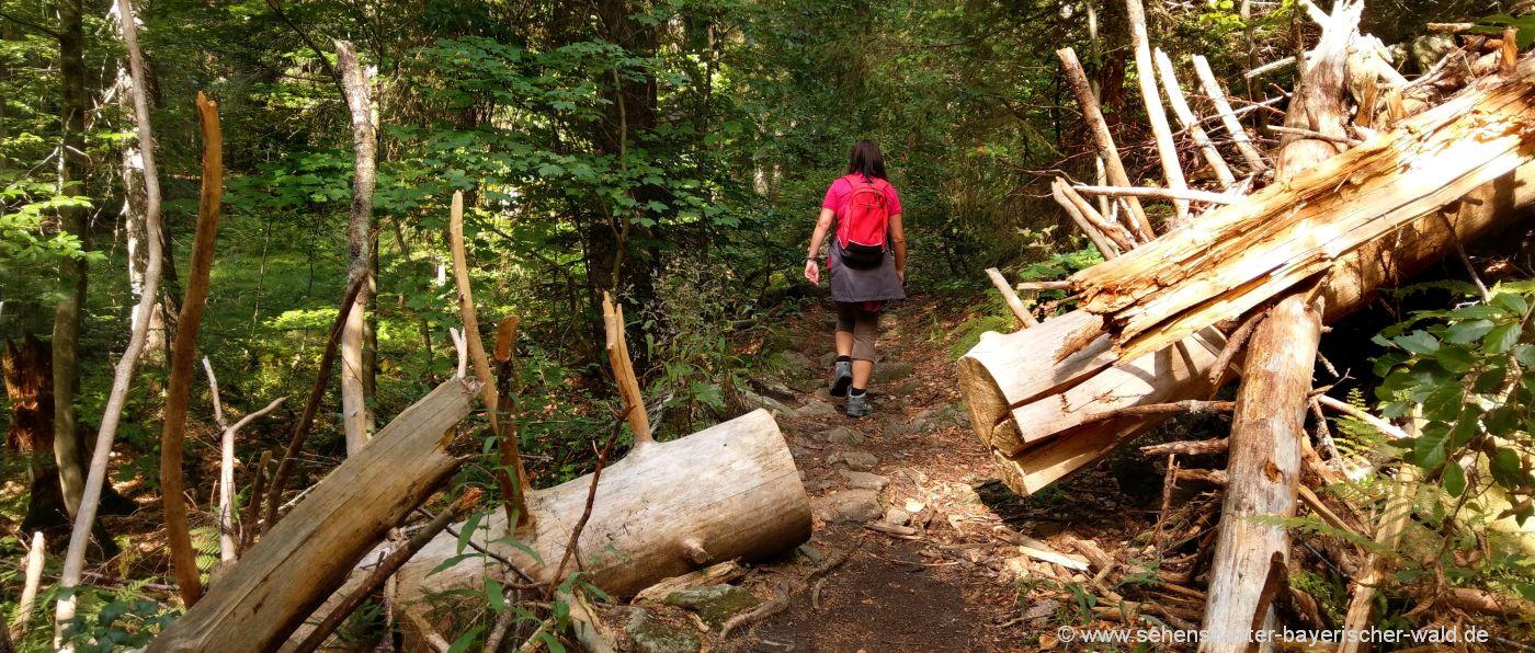 Wanderwege im Nationalpark Wandertouren am Berg Falkenstein