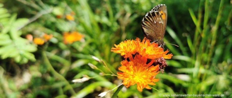 Naturbilder aus Bayern Blumen Schmetterlinge Naturfotos Bayerischer Wald