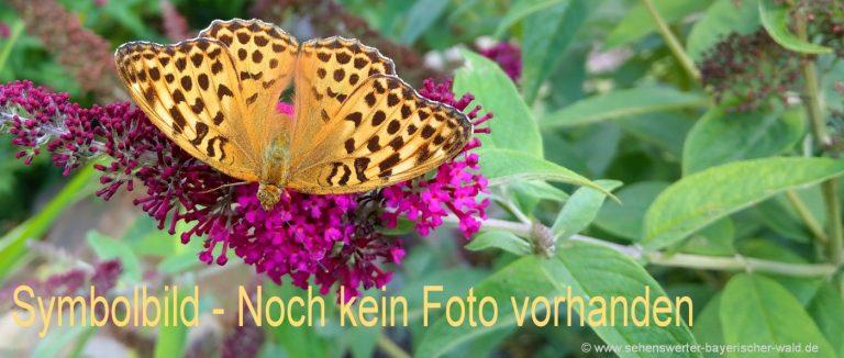 symbolbild naturbilder-schmetterlinge-tierfotos-pflanzen
