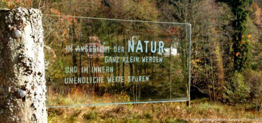 naturerlebnisse-bayerischer-wald-wanderurlaub-bayern