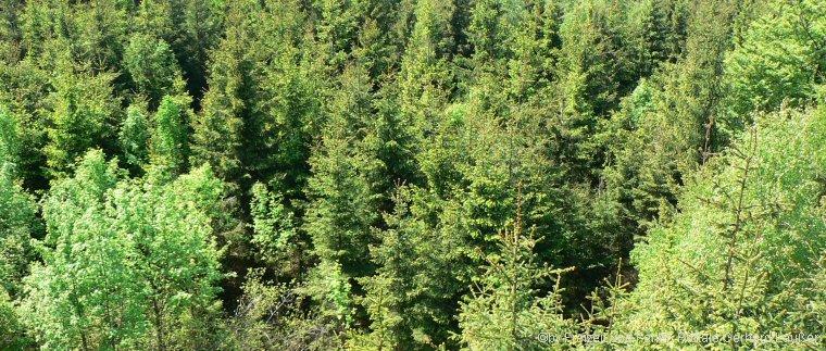Kletterwald in Sankt Englmar Hochseilgarten über den Baumwipfeln