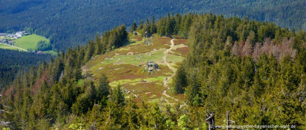 Wandern zum Osser Gipfel Kreuz und Osserwiese
