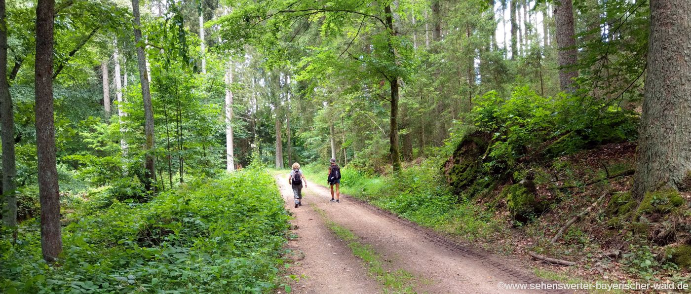 Wandern durch den Wald am Otterbach Ausgangspunkt Hammermühle