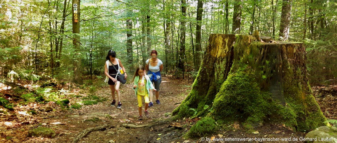 Bayerischer Wald Wandertouren in Bayern, Niederbayern und Oberpfalz