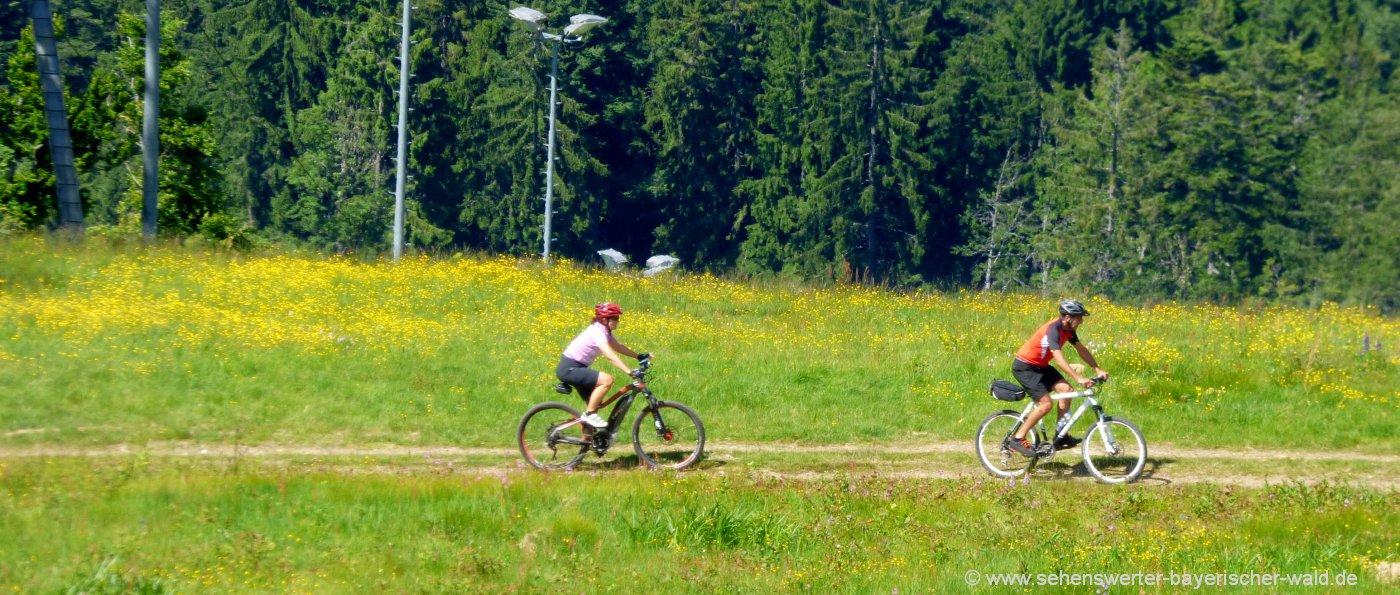 radfahren-bayerischer-wald-radtouren-bayern-radwege