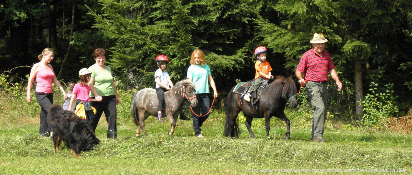 Bayerischer Wald Reiterferien in Bayern am Ponyhof