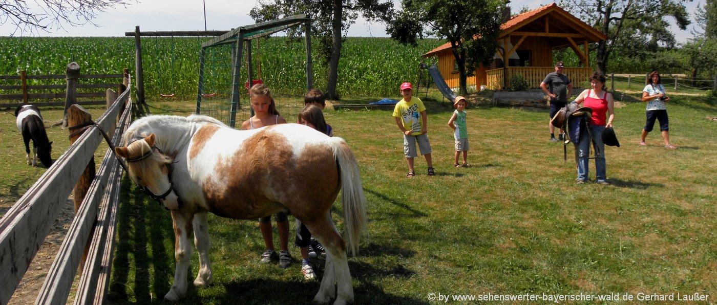 Bauernhofurlaub in Schwandorf Urlaub am Reiterhof und Ponyhof