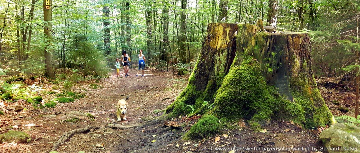 rundwanderwege-nationalpark-bayerischer-wald-rundweg-panorama