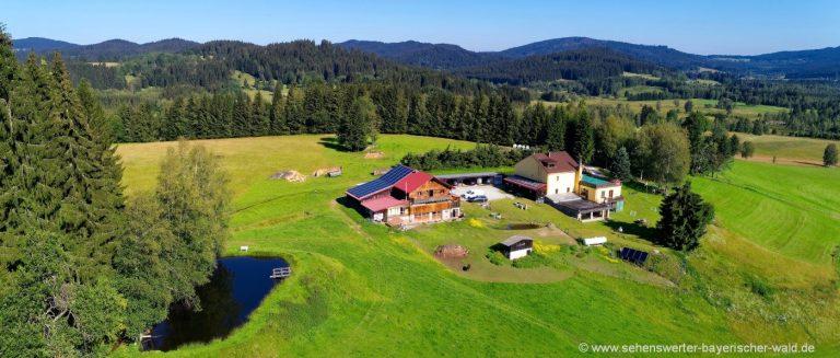 runenhof-bauernhofpension-dreiländereck-bayerischer-wald-alleinlage