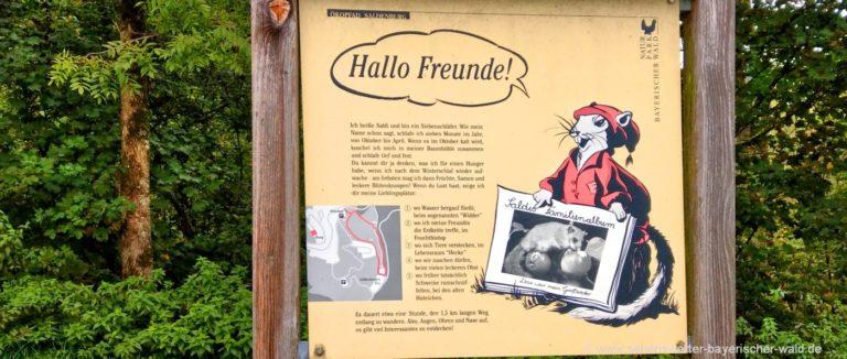saldenburg-oekoweg-wanderung-siebenschlaeferweg-infotafel-panorama-1400