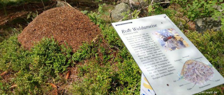 sankt-englmar-wildes-waldgebirge-lehrpfad-rundweg-ameisenburg