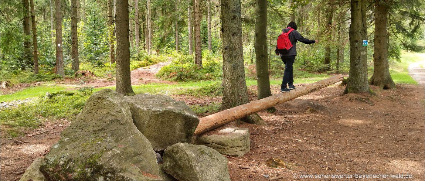 sankt-englmar-wildes-waldgebirge-naturlehrpfad-erlebnisweg