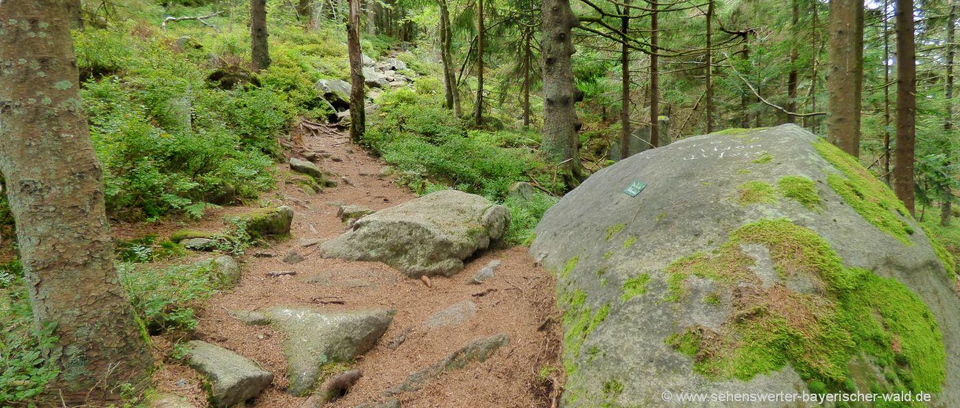 sankt-englmar-wildes-waldgebirge-naturlehrpfad-rundweg-felsen