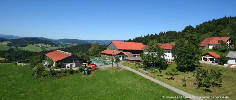 schätzl-bauernhof-urlaub-waldkirchen-ferienwohnungen