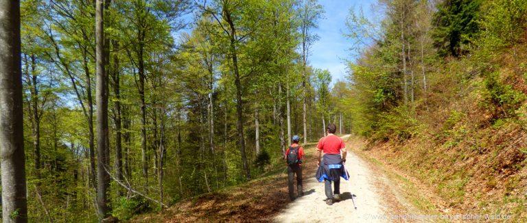 schareben-wanderung-bayerischer-wald-wanderwege-berghütten