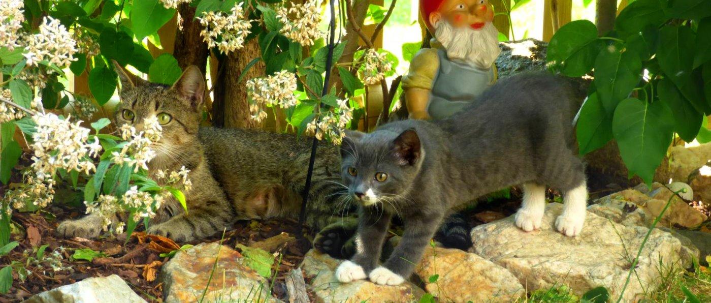Katzen am Bauernhof im Oberpfälzer Wald bei Tiefenbach & Treffelstein