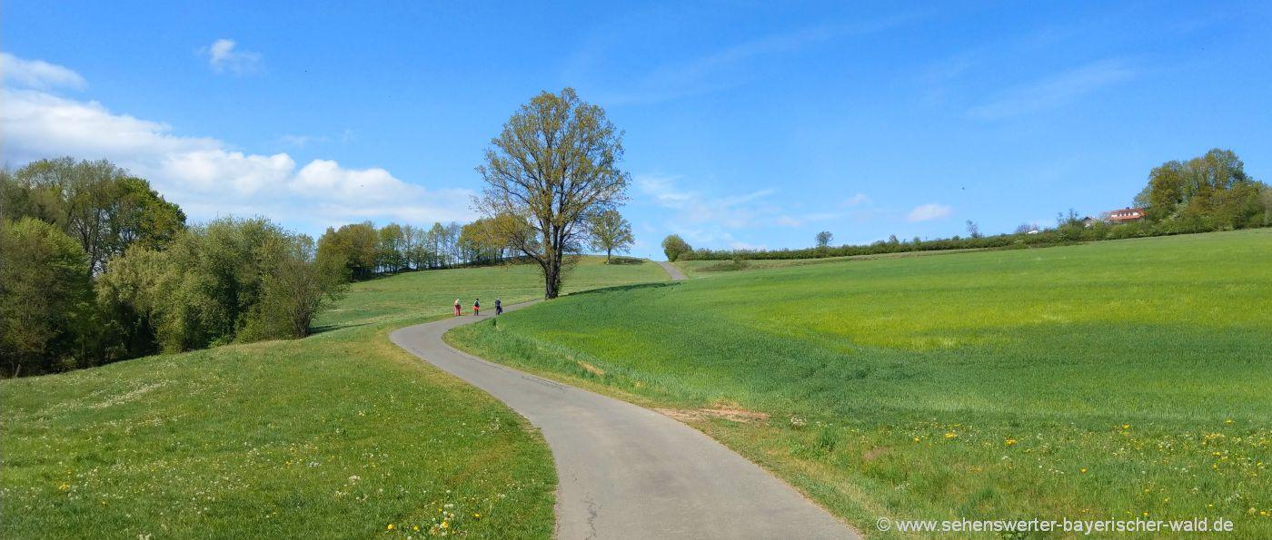 schorndorf-rundwanderweg-neuhaus-laengseugenweg-cham-oberpfalz-horizont