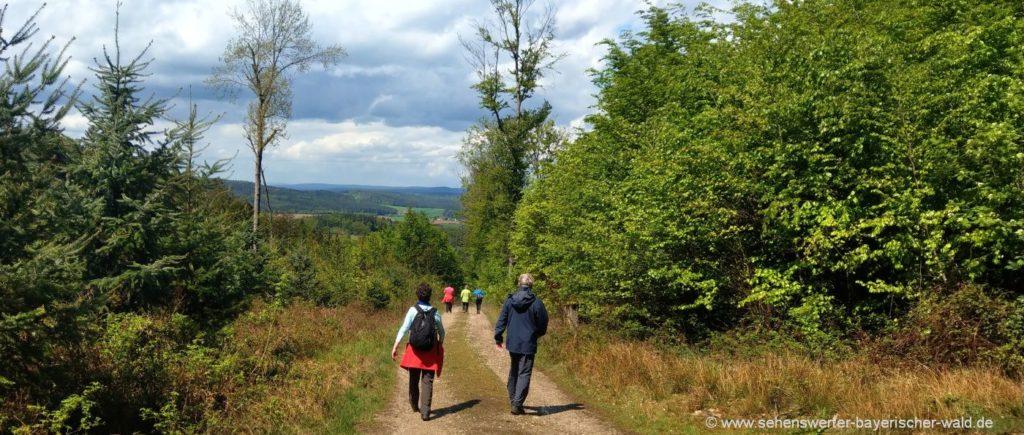 Wanderung am Längseugenweg im Landkreis Cham