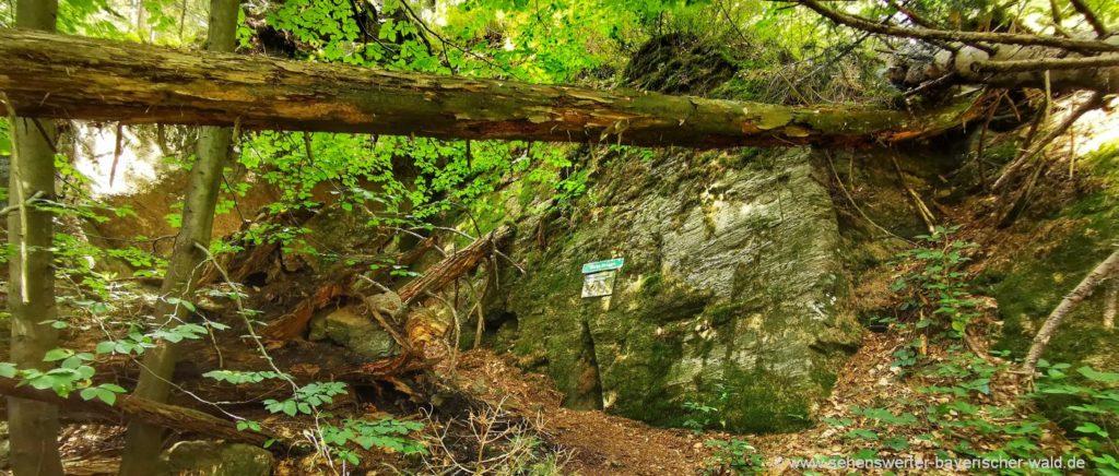 Wandern am Urwaldweg Schussbach Tour ab Arnbruck