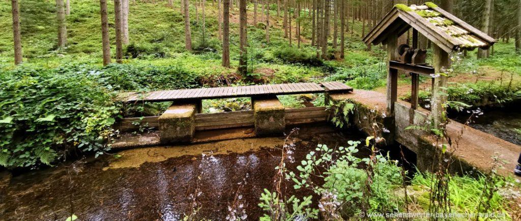 Wanderung am Urwaldweg und Schussbach Wandertour