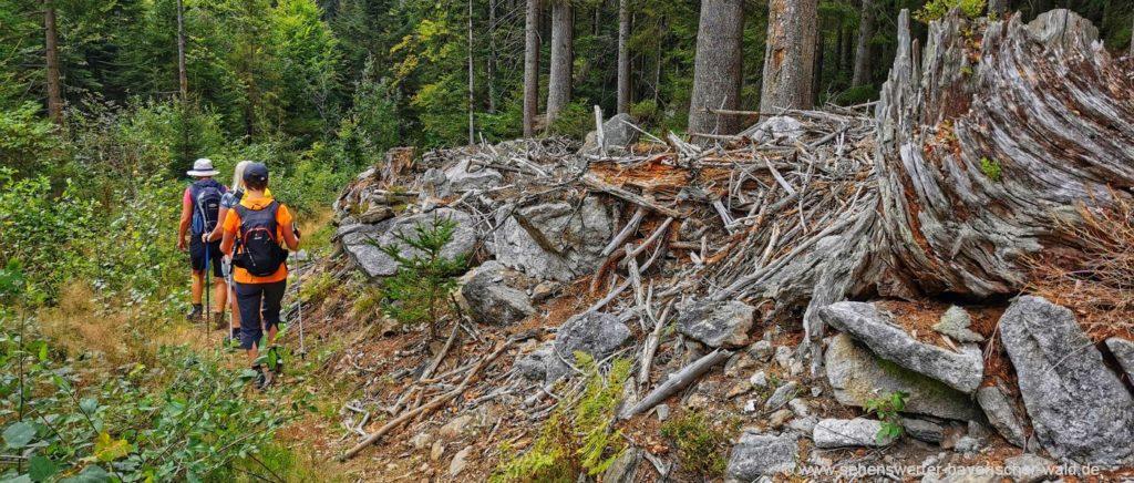 Wandern am Urwaldsteig Wasserfall, Baumriese, Steinformation