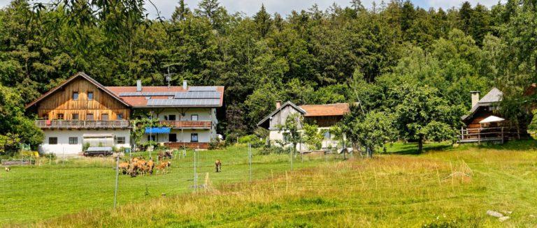 sellmayer-spiegelau-ferienhaus-nationalpark-hütten-unterkunft