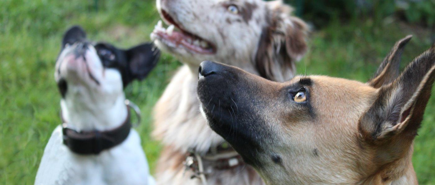 Übernachtung in Zwiesel Urlaub mit Hund Pension in Bayern