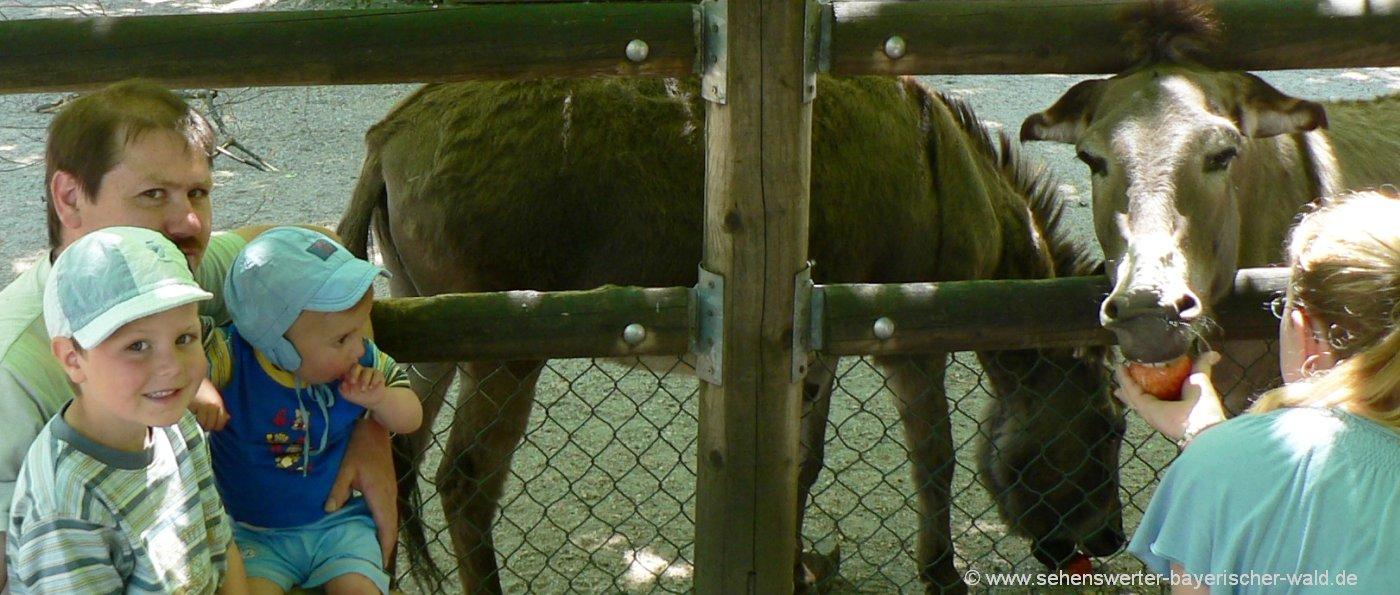 straubing-tierpark-freizeitangebote-esel-tiergehege-zoo-niederbayern