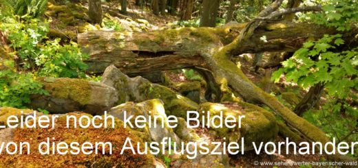 Natur Bilder Bayerischer Wald Fotos Felsen Baumstamm