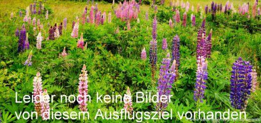 symbol-bilder-blumen-natur-fotos-bayerischer-wald-landschaft