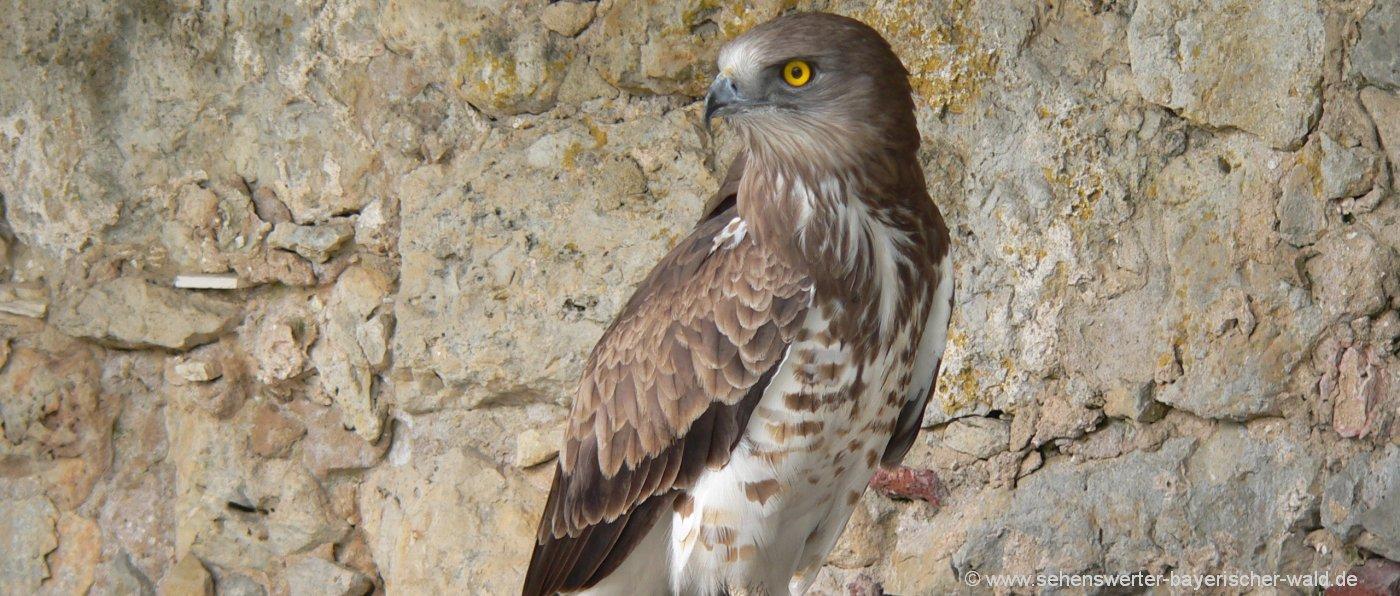 Sehenswürdigkeiten in Grafenwiesen Greifvogelpark Flugshow