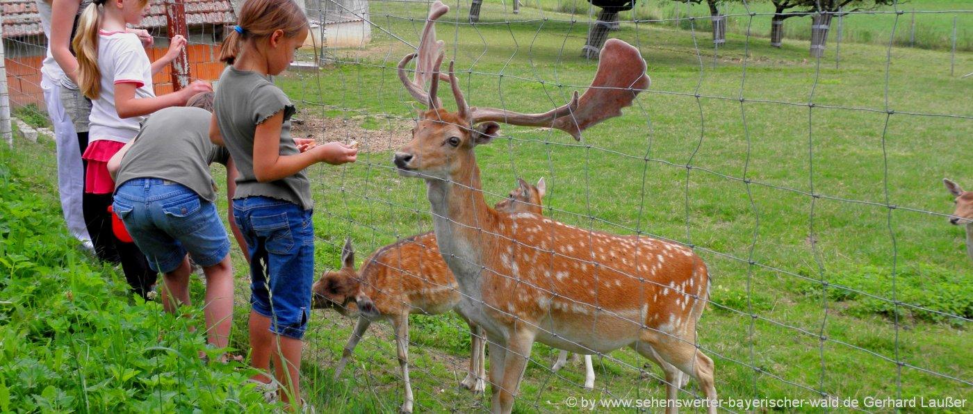 tierpark-oberpfalz-wildtierpark-hirschgehege-kinder-fuettern-