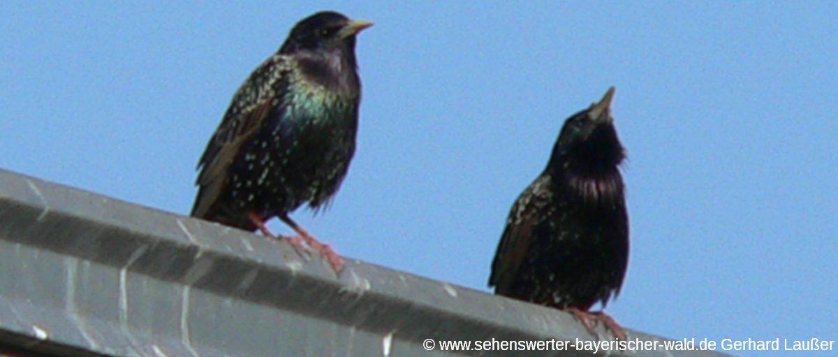 vogelpark-irgenoed-ausflugsziel-tierpark