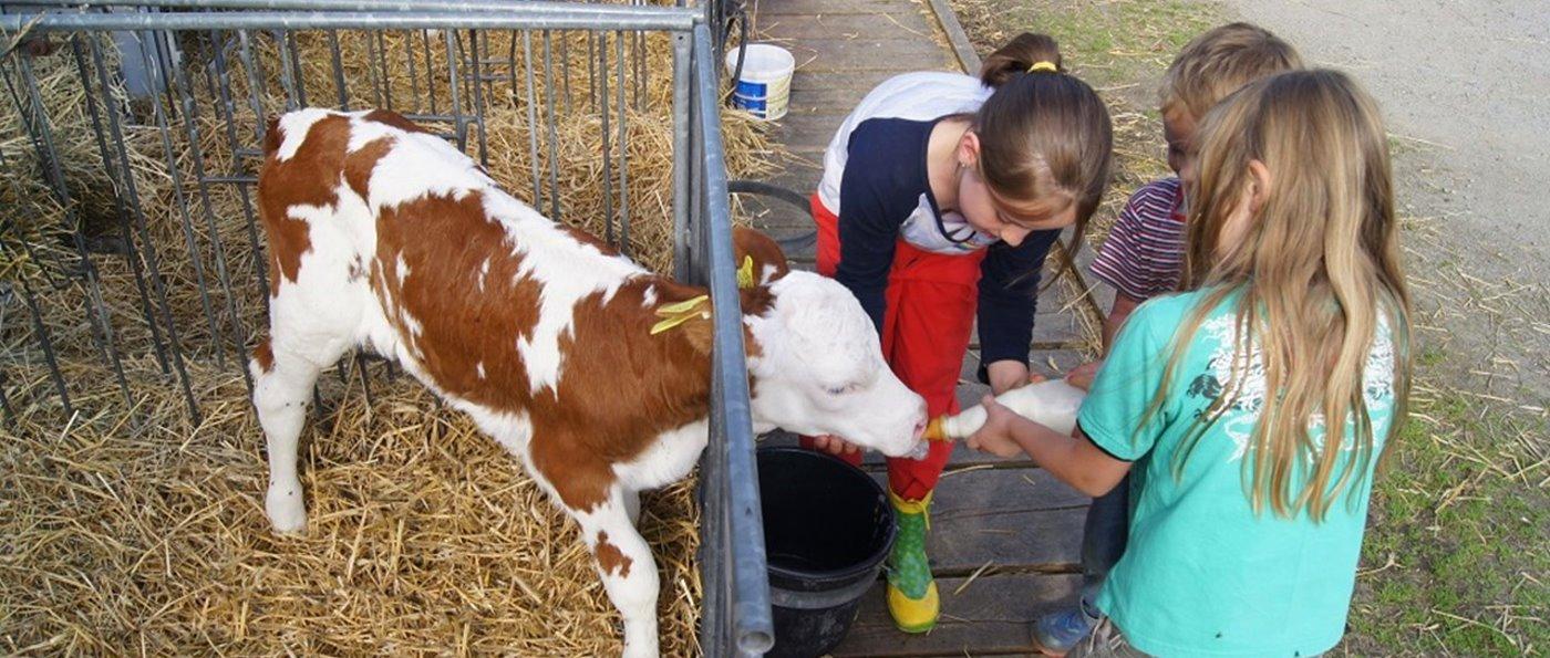 Bayerischer Wald kinderfreundlicher Bauernhof Kälbchen füttern