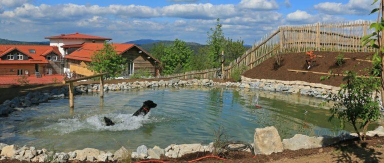 waldeck-wellnesshotel-mit-hund-dreilaendereck-bayerischer-wald-
