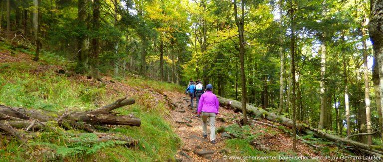 wanderurlaub-bayerischer-wald-familien-wandern-mit-kindern