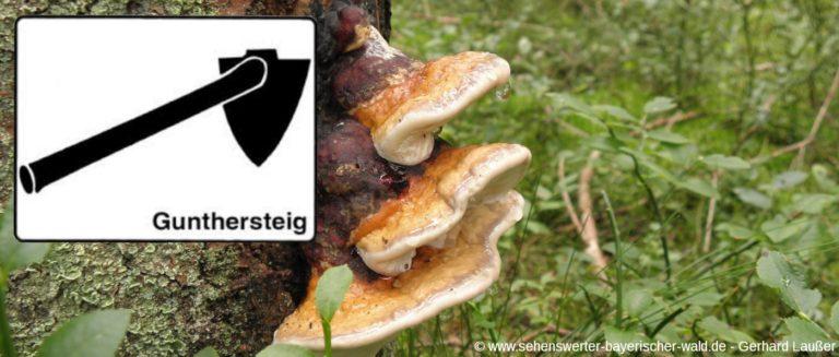 wanderweg-gunthersteig-bayerischer-wald-baum-pilze