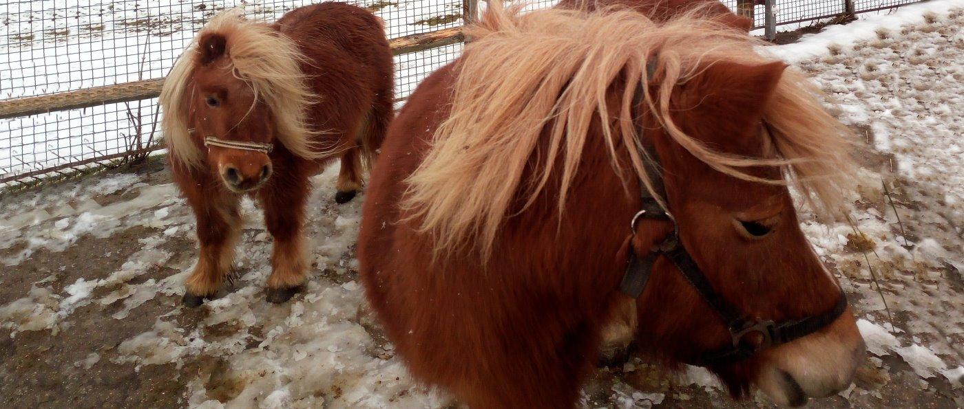 Bayerischer Wald Ferienwohnung mit Pony Reiten und Streichelzoo in Bayern