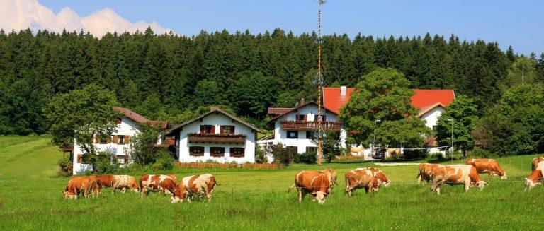 wieshof-kinder-biobauernhof-bayerischer-wald-ferienwohnungen