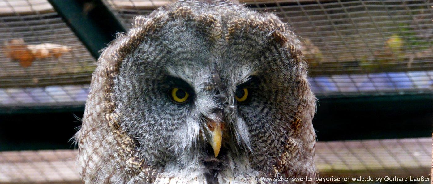 wildgehege-niederbayern-tierpark-bayerischer-wald-zoo-eule
