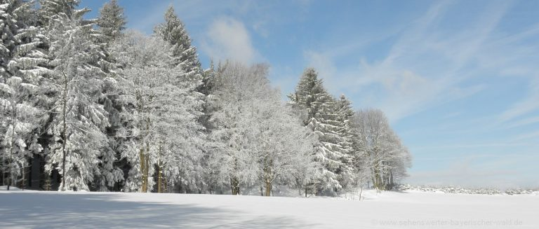 winterurlaub-bayern-winterferien-bayerischer-wald-landschaft