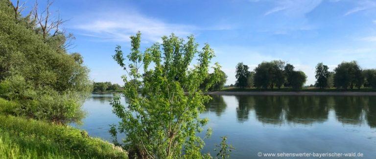 winzerer-letten-naturschutzgebiet-donaualtwasser-niederbayern