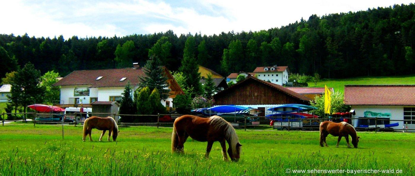 Reiturlaub für Erwachsene in Bayerischer Wald Reiterferien